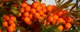 Hippophae - Sea-Buckthorn 450g Fresh Frozen